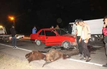 Otomobil sürüye çarptı; 5 koyun telef oldu