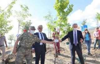 Şehitler anısına Hatıra Ormanına 150 fidan dikildi
