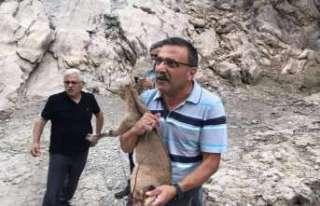 Yavru bir dağ keçisine yardım eli