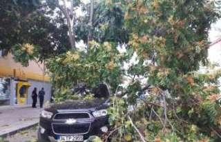 Erzincan'da rüzgar maddi zarara yol açtı