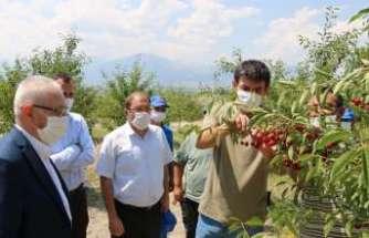 Erzincan'dan 95 ülkeye vişne ihracatı