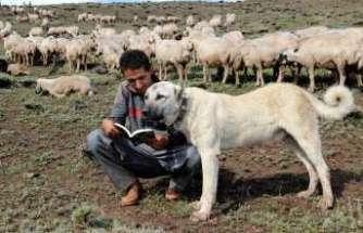 Umut çoban, Alzheimer'a umut oldu