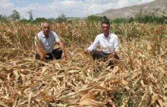 """Erzincanlı çiftçilerin feryadı: """"45 gündür tarlamıza su veremiyoruz"""""""