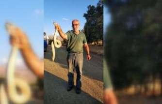 Macrovipera lebetina yılanı vatandaşa saldırdı