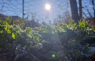 Doğu'da hava sıcaklığı mevsim normalleri üzerinde seyrediyor