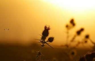Doğu'da hava sıcaklığı mevsim normallerinin 2 ila 4 derece üzerinde seyrediyor