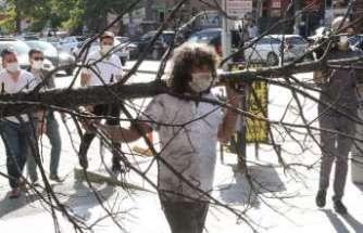 Profesör orman yangınlarına dikkat çekmek için zarar gören ağaçları sırtında taşıdı